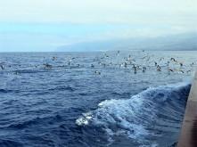 pescarusi-in-mijlocul-oceanului